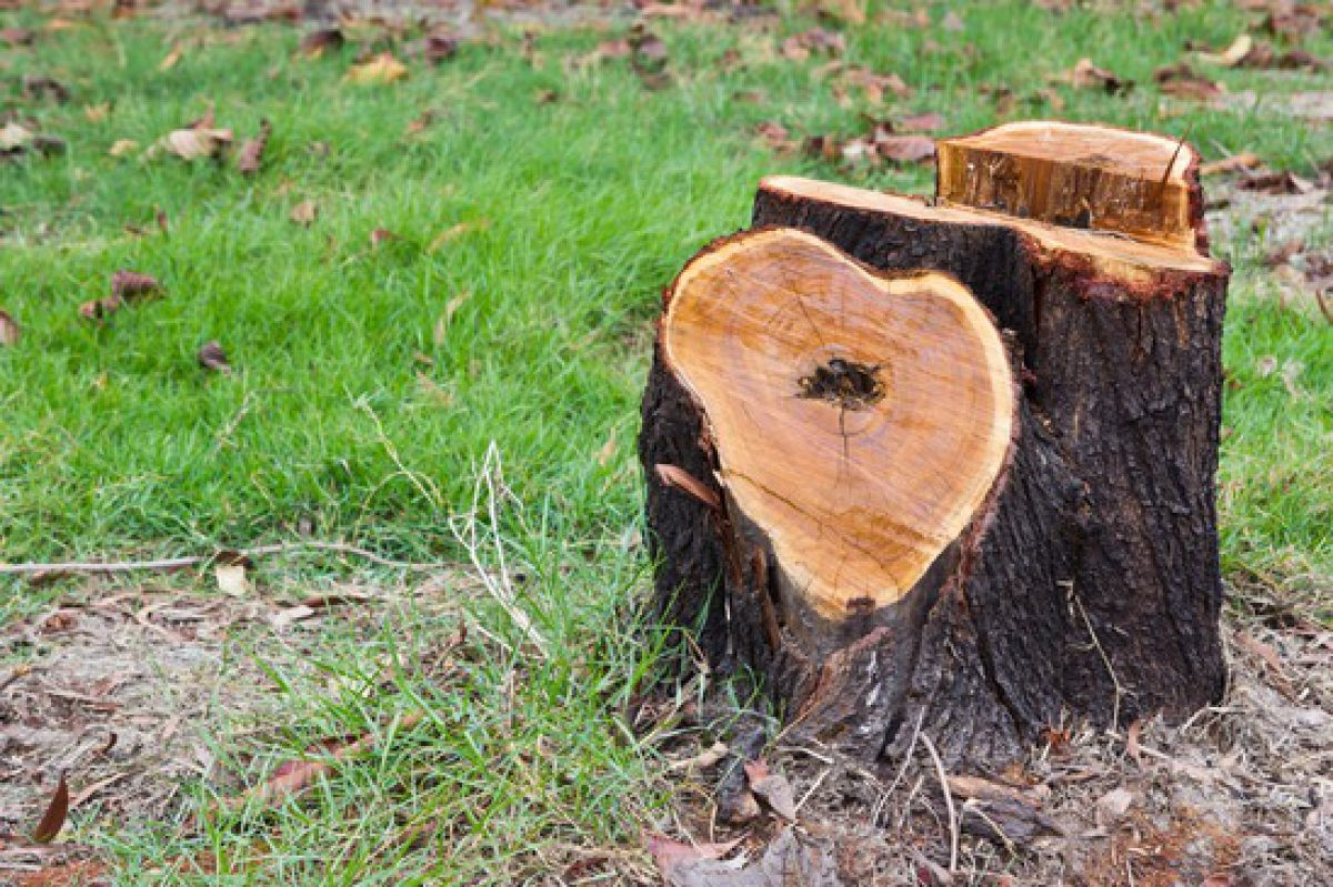 4 Reasons to Remove Tree Stumps From Your Yard (Link Roundup)