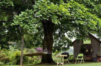 Big Shade Trees