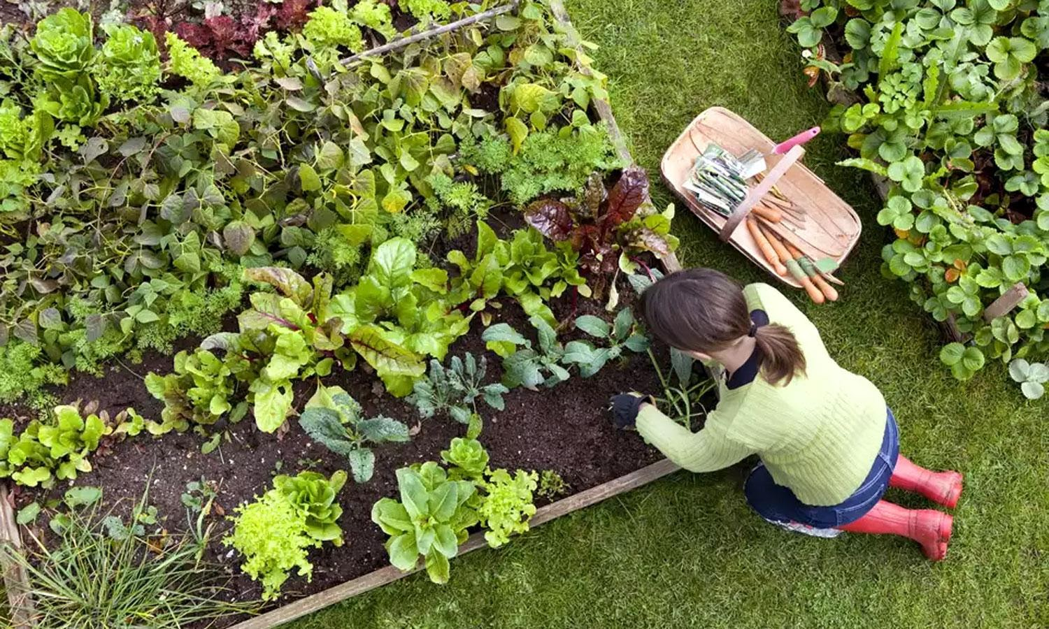 Creating an Eco-Friendly Garden