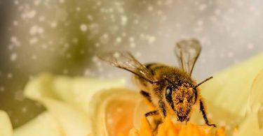 Benefits of Bee Venom for Skin Care